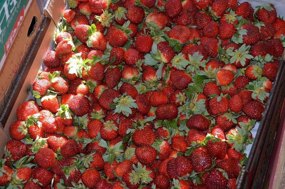 firetree place fresh express box of fresh strawberries